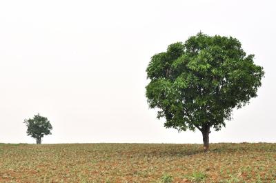 Inga träd växer till himlen - stora och små bolag