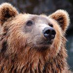 Hur väl står sig din portfölj i en björnmarknad?